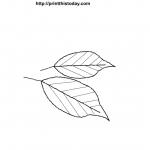 Cute free printable Autumn leaves coloring Pages for kids
