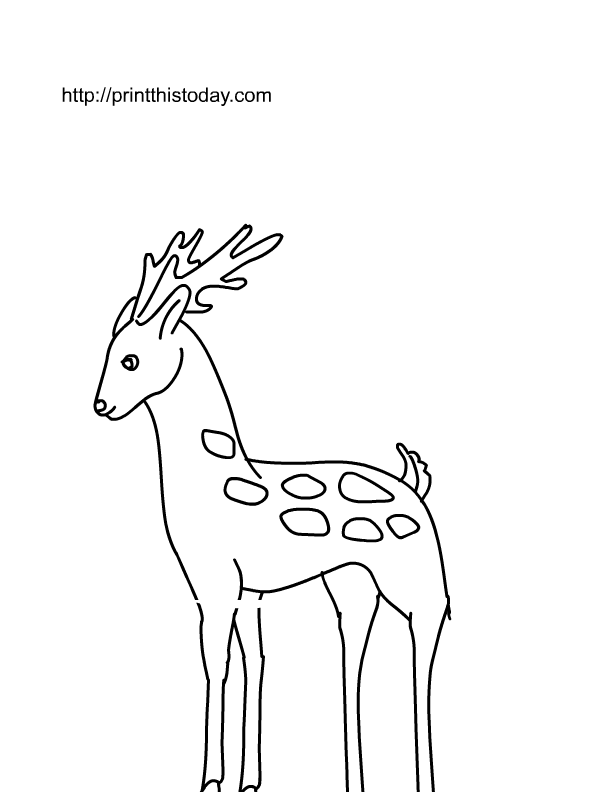 Line Drawings Of Jungle Animals : Free printable wild animals coloring pages