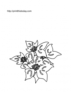 Free Printable Poinsettia coloring Page