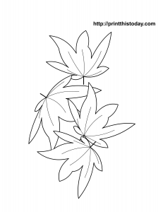 free printable maple leaves autumn coloring page for kids