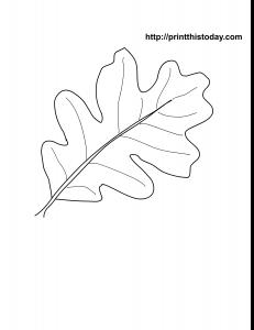 free printable oak leaf coloring page